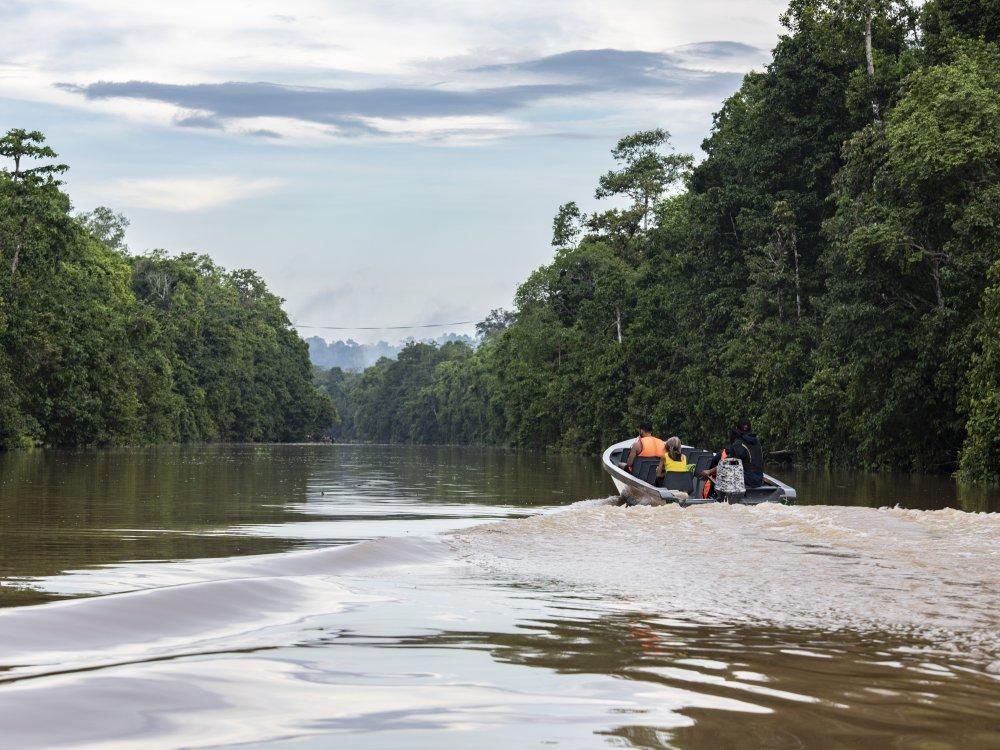 Kinabatangan River Excursion