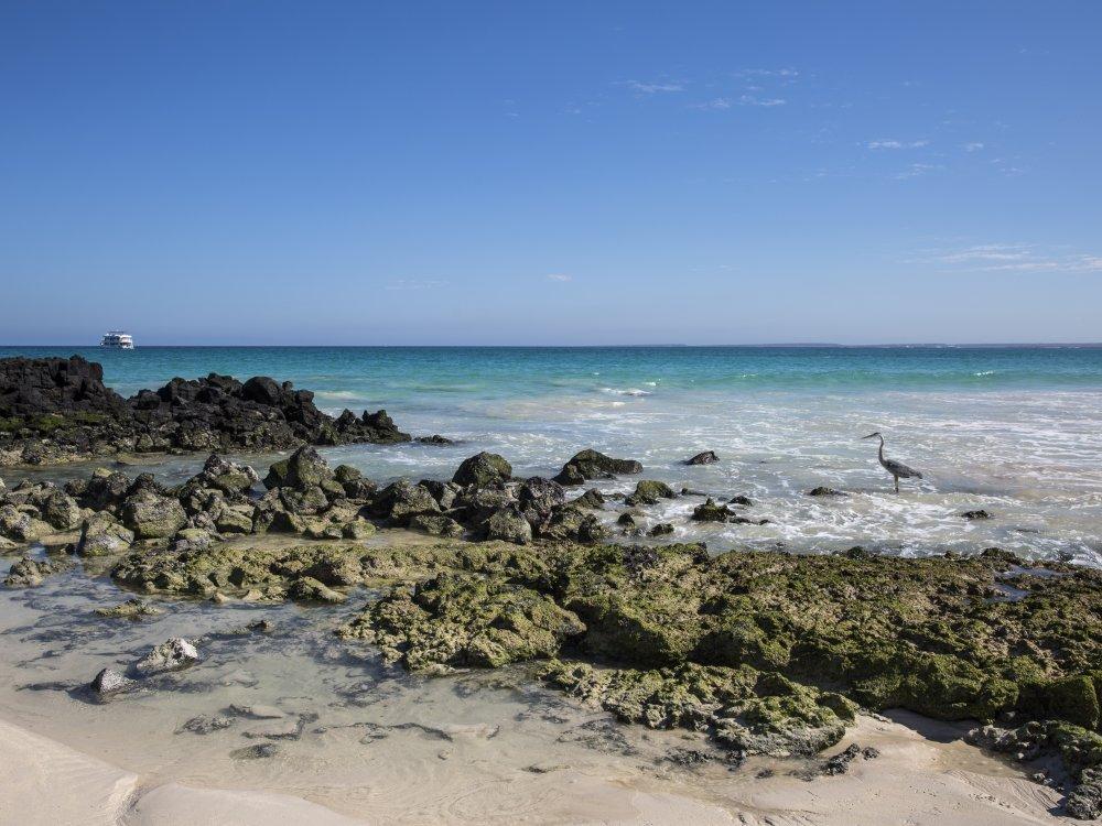 Strand Bachas Beach Galapagos