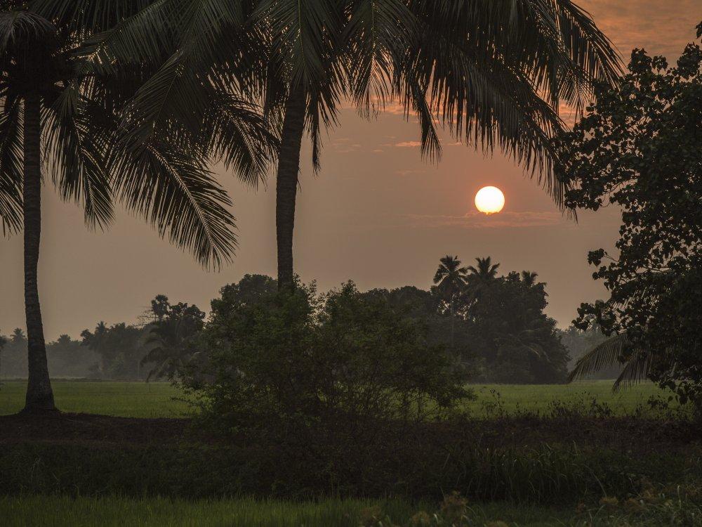 Kerala Backwaters_6