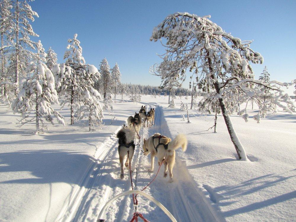 Hundeschlitten Tour in Winterlandschaft