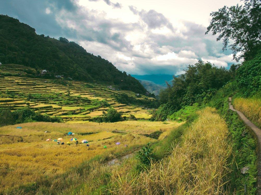 Wanderpfad in der Region Ifugao