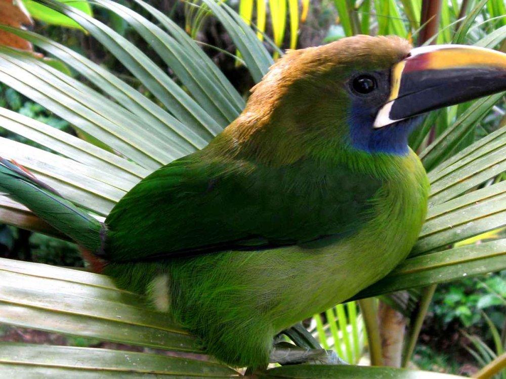 Costa Rica erleben