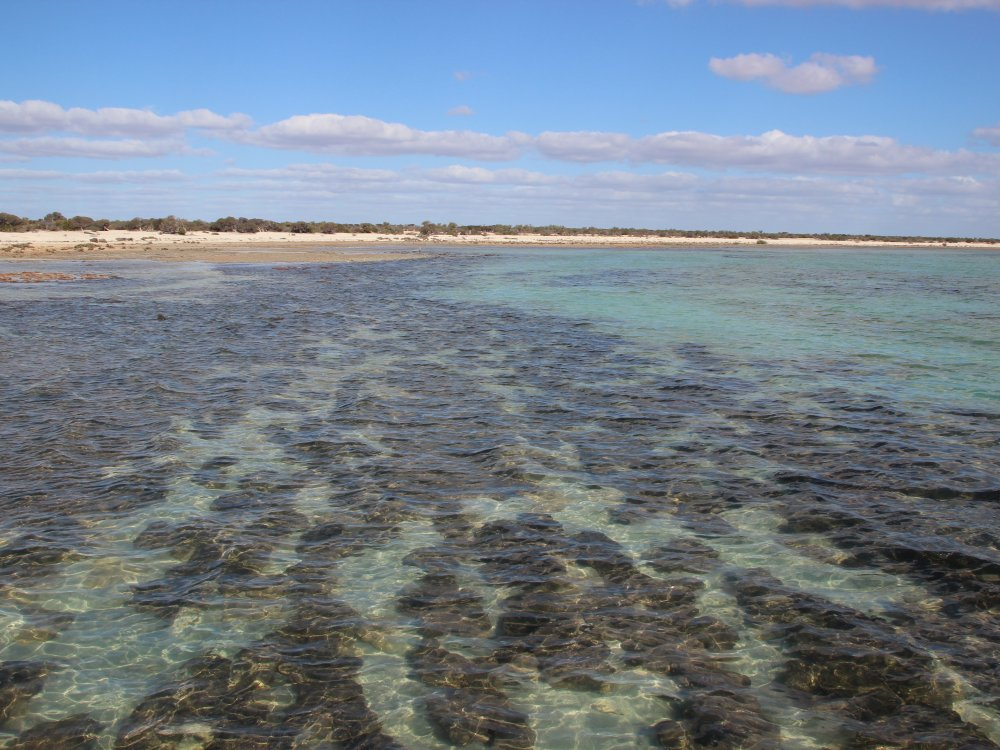 Stromatolites Shark Bay