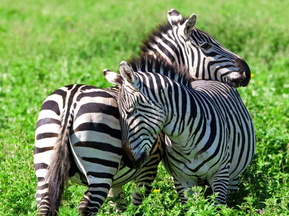 Gorongosa Nationalpark