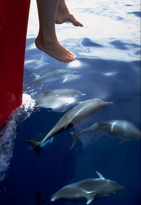 Delfin Beobachtung auf La Gomera