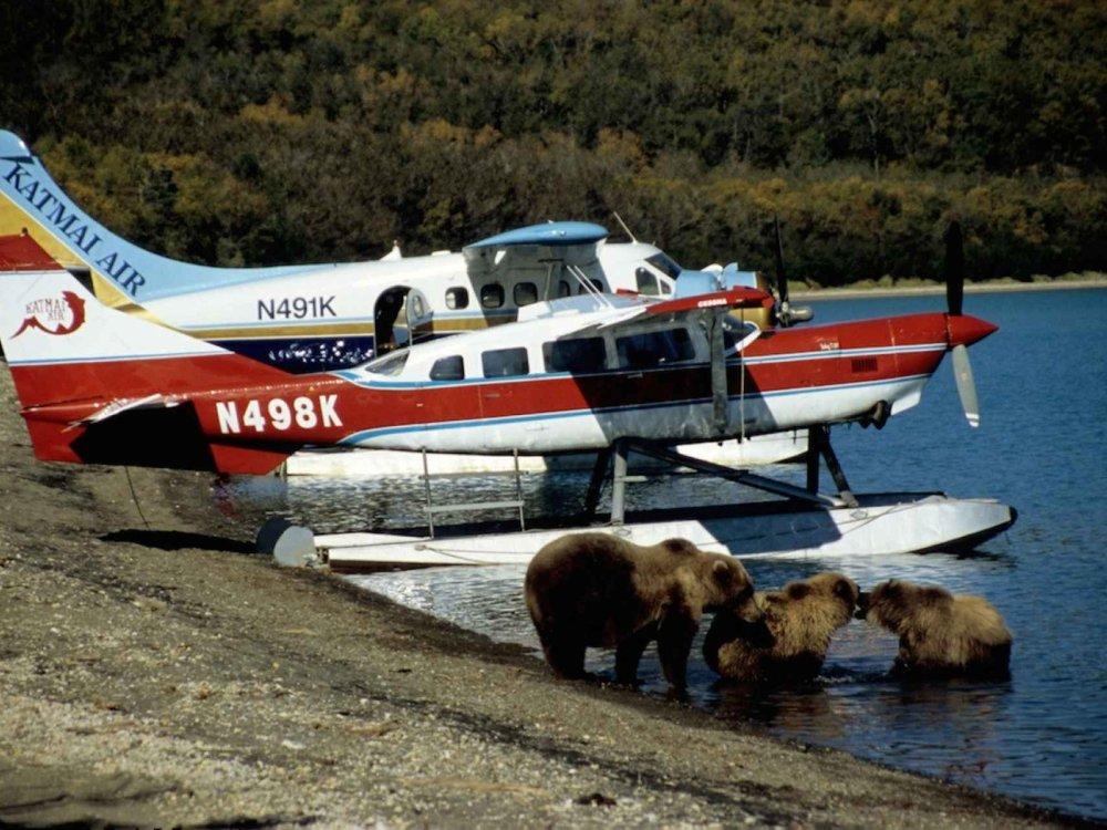 Wasserflug umgeben von Bären im Katmai Nationalpark