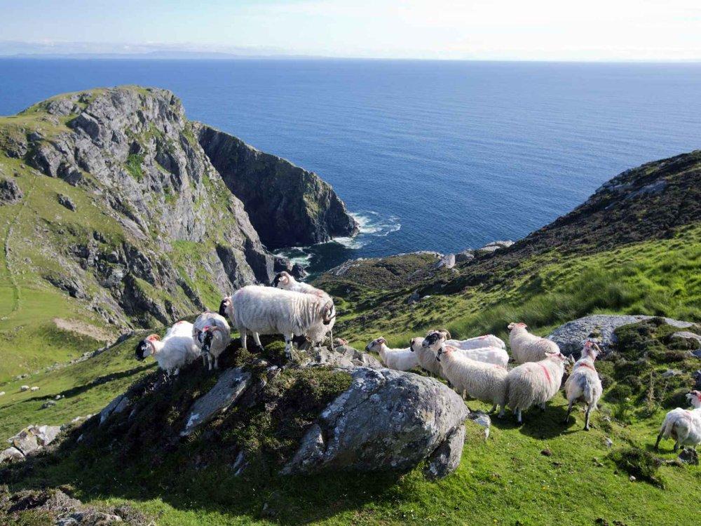 Höhepunkte von Irland