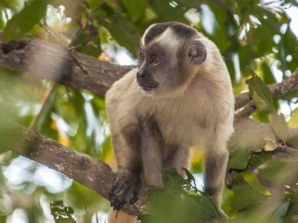 Tiere Pantanal_6