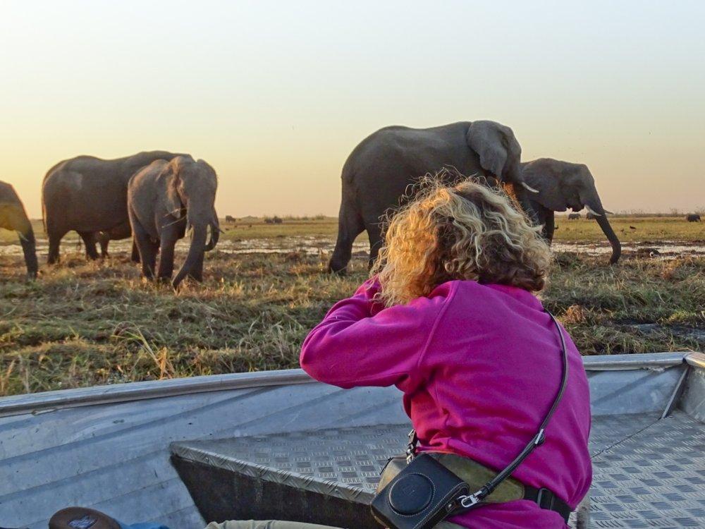 Elefanten fotografieren bei einer Bootsafari auf dem Chobe River
