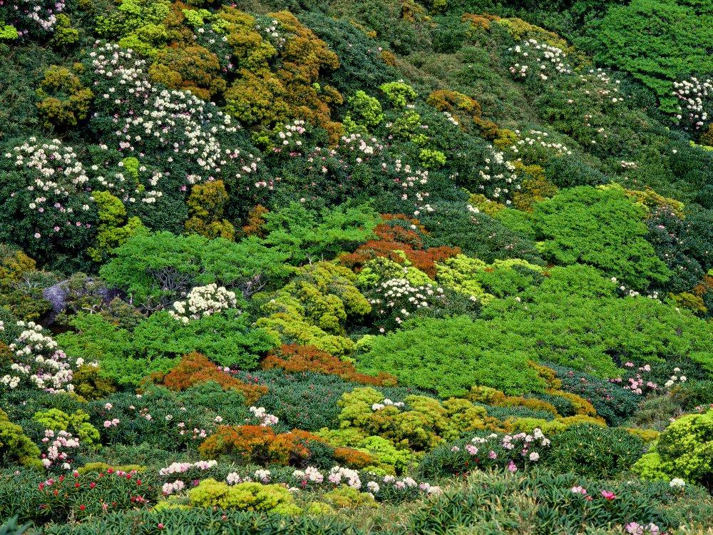 Yakushima Vegetation