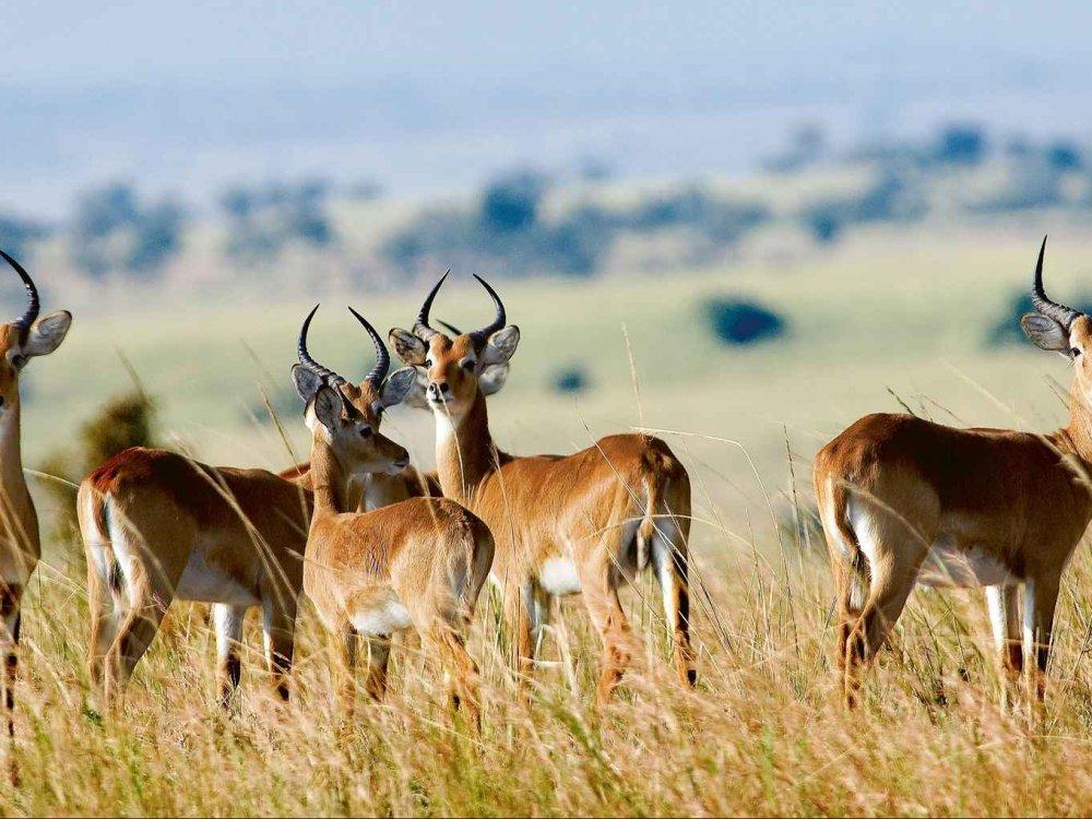 Amakhala Game Reserve