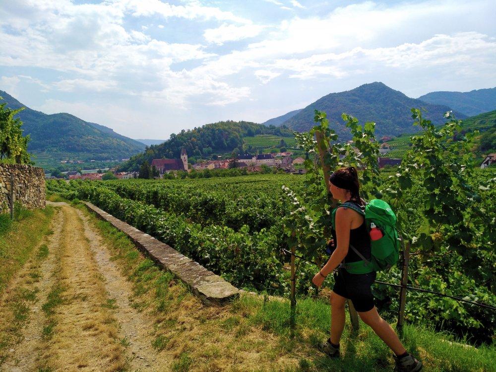 Wanderreise Welterbesteig Wachau Spitz Weinreben Wanderpfad
