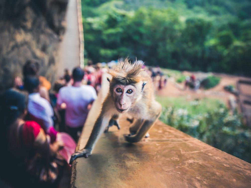 Aufstieg zur Sigiriya Felsenfestung