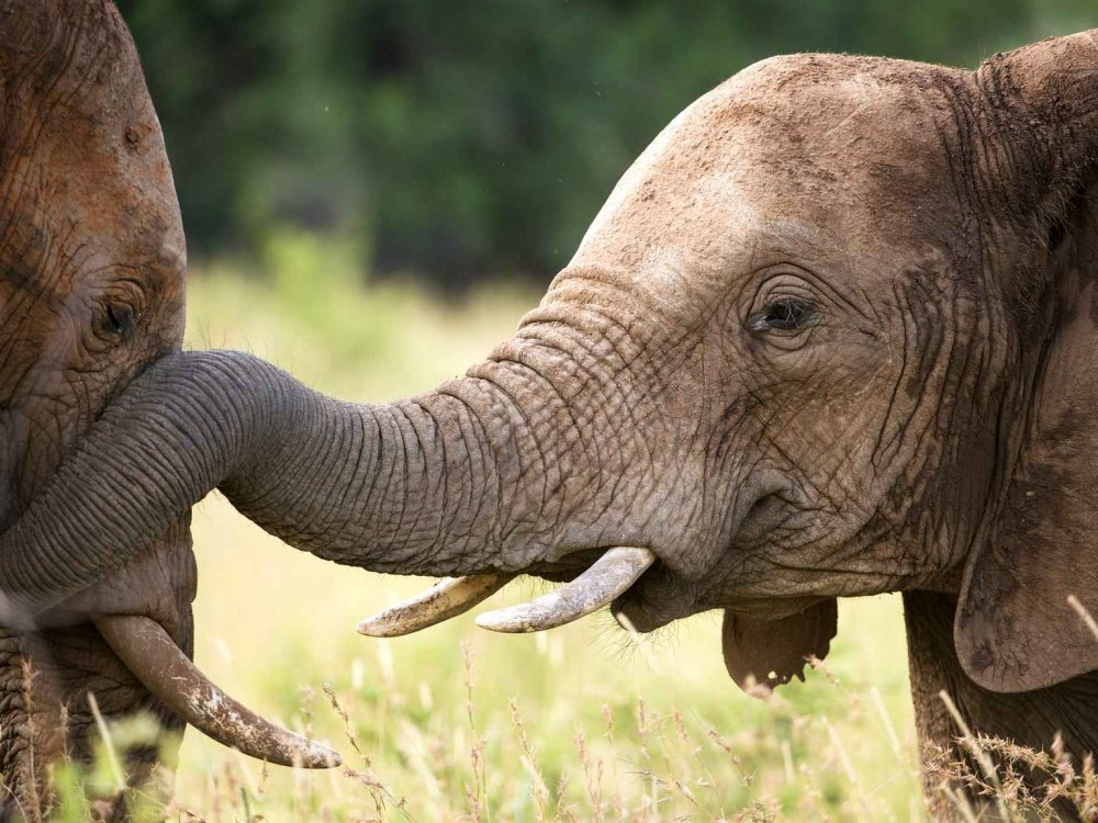 Namibia & Botswana Komfort-Safari