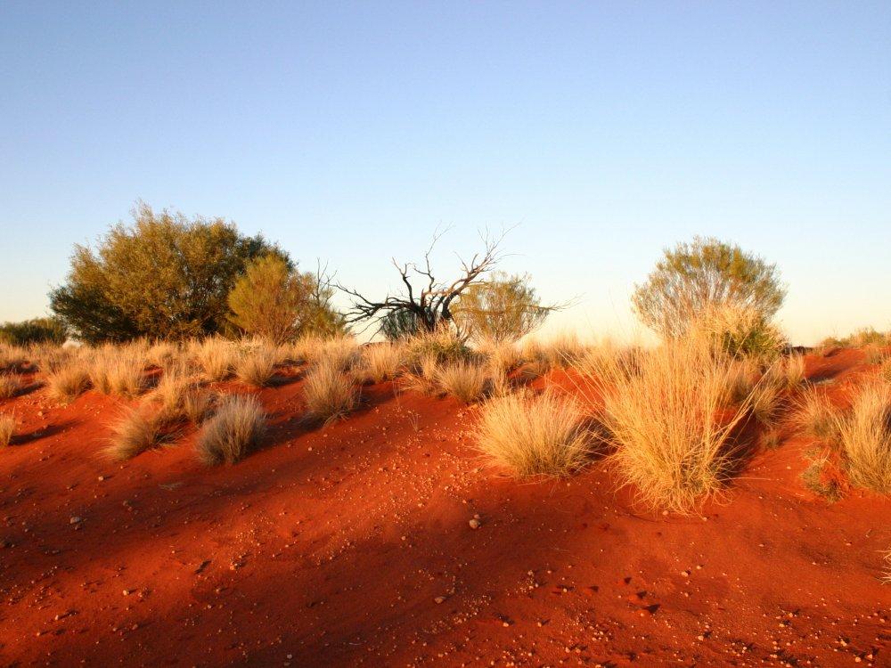 Steppe in Australien