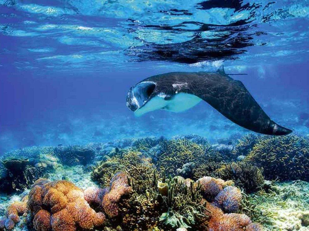 124Y21007 Raja Ampat - Magische Unterwasserwelten