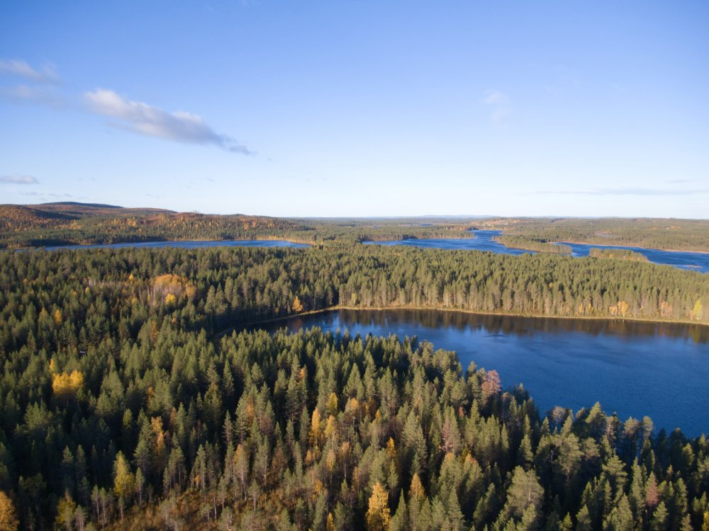 Seen und Wälder in Oulanka