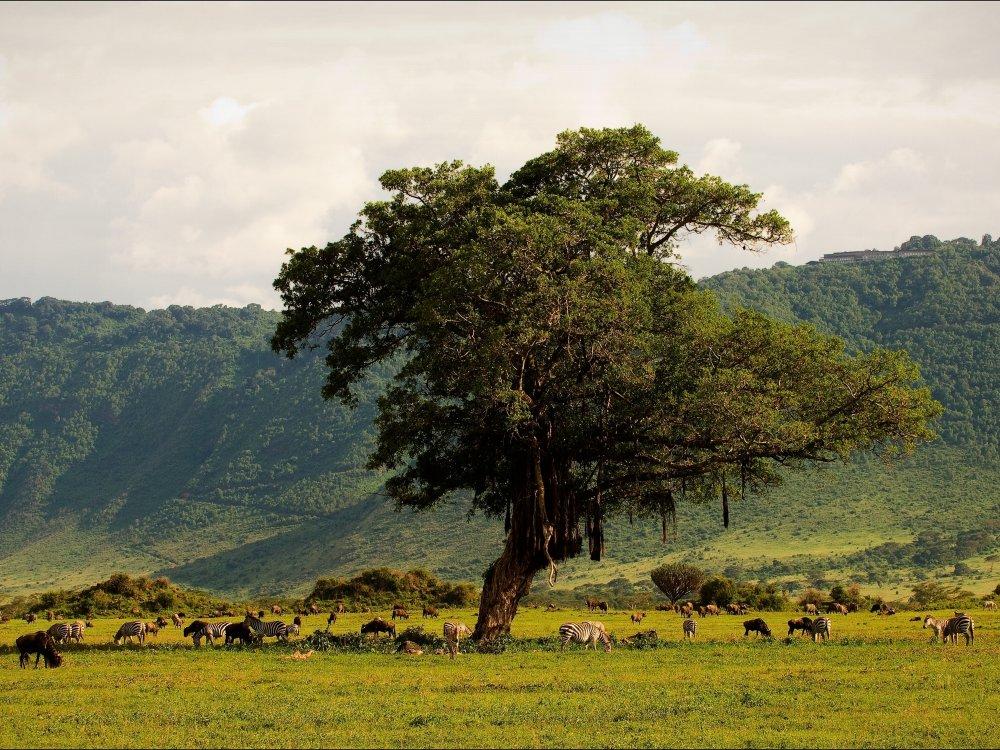 Wildtiere im Ngorongoro Krater