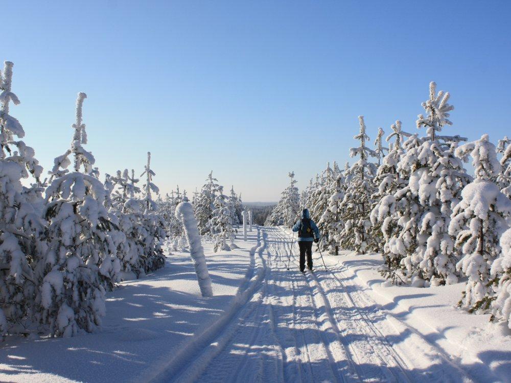 Skilanglaufen an der russischen Grenze