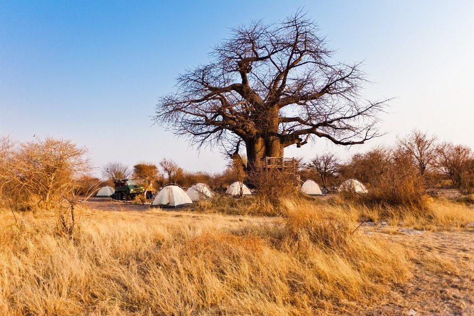 Camping an einem riesigen Baobab Baum in Botswana