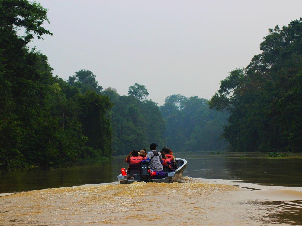 Boostour auf dem Kinabatangan River