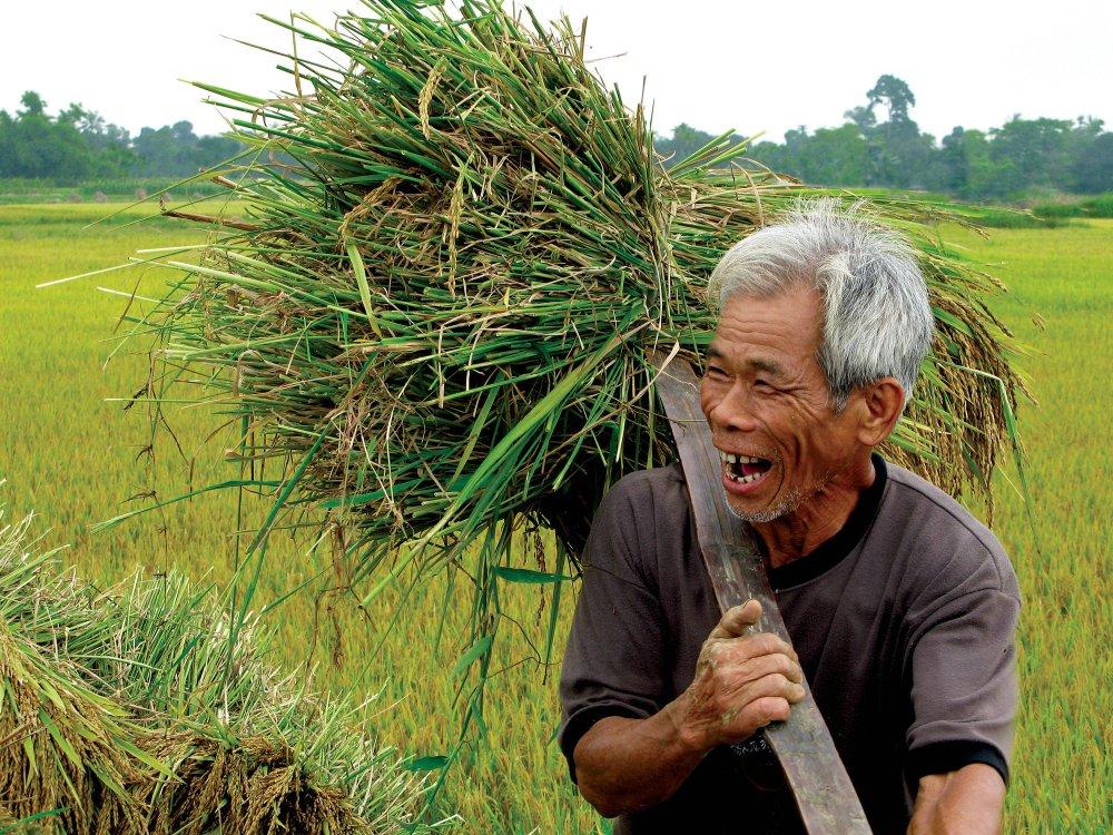 Fröhlicher Reisbauer in Hue