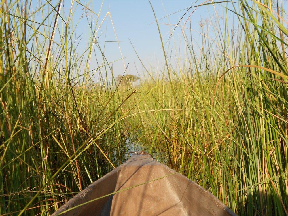 Mokoro Safari in Botswana