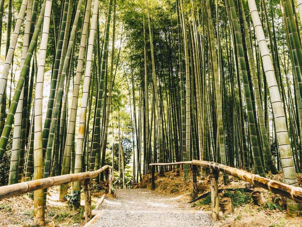Rucksackreise durch Japan