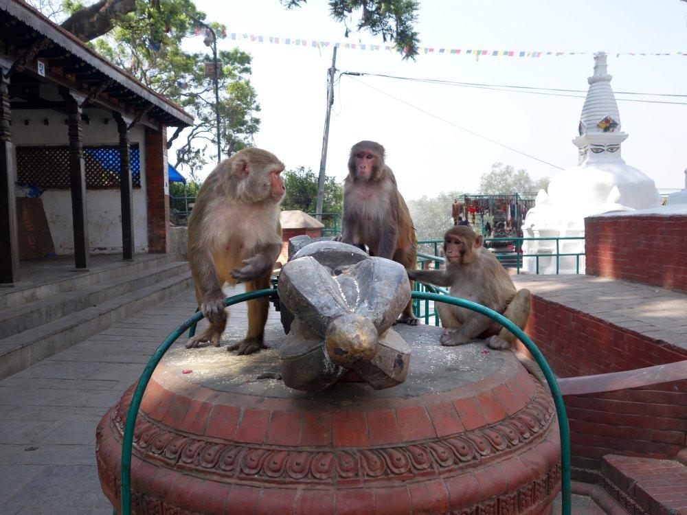 Affentempel Kathmandu