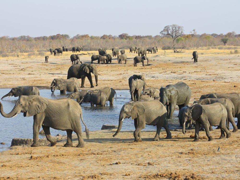 Elefanten im Hwange Nationalpark