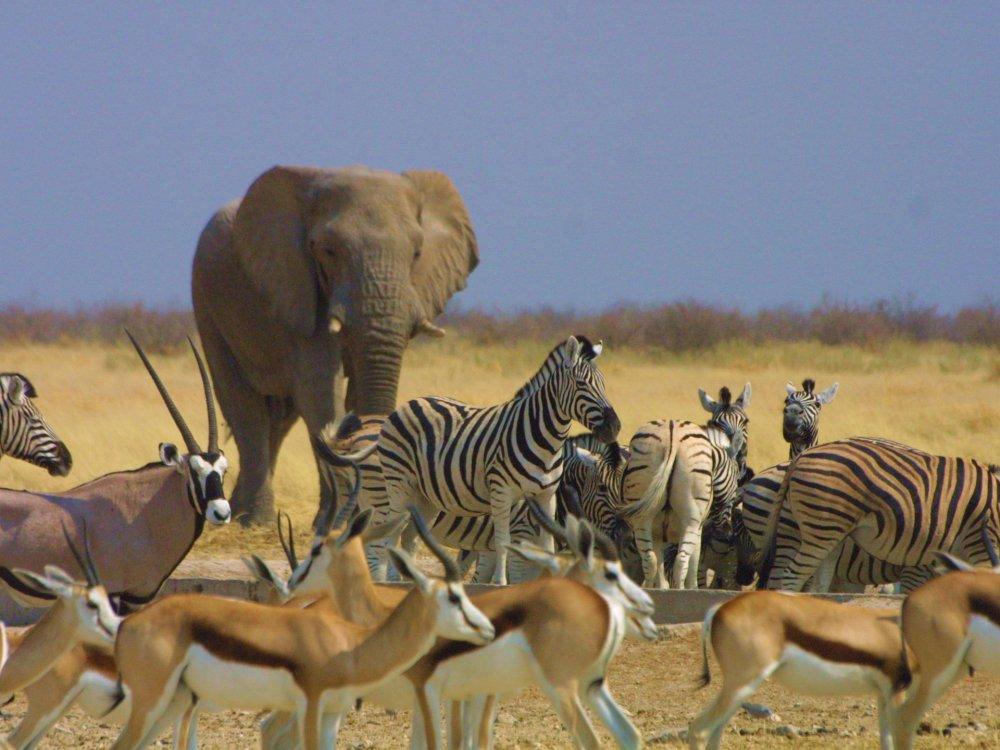 Etoscha Tierwelt