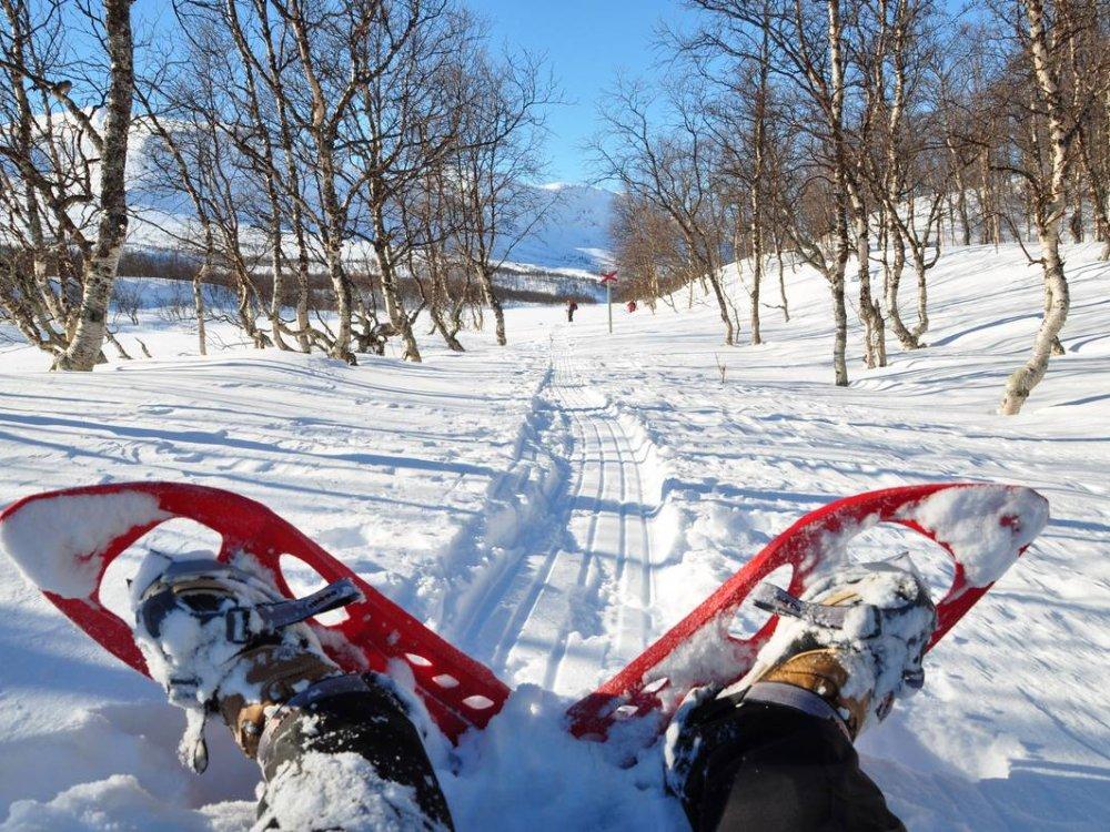Schwedisch Lappland Schneeschuhtour