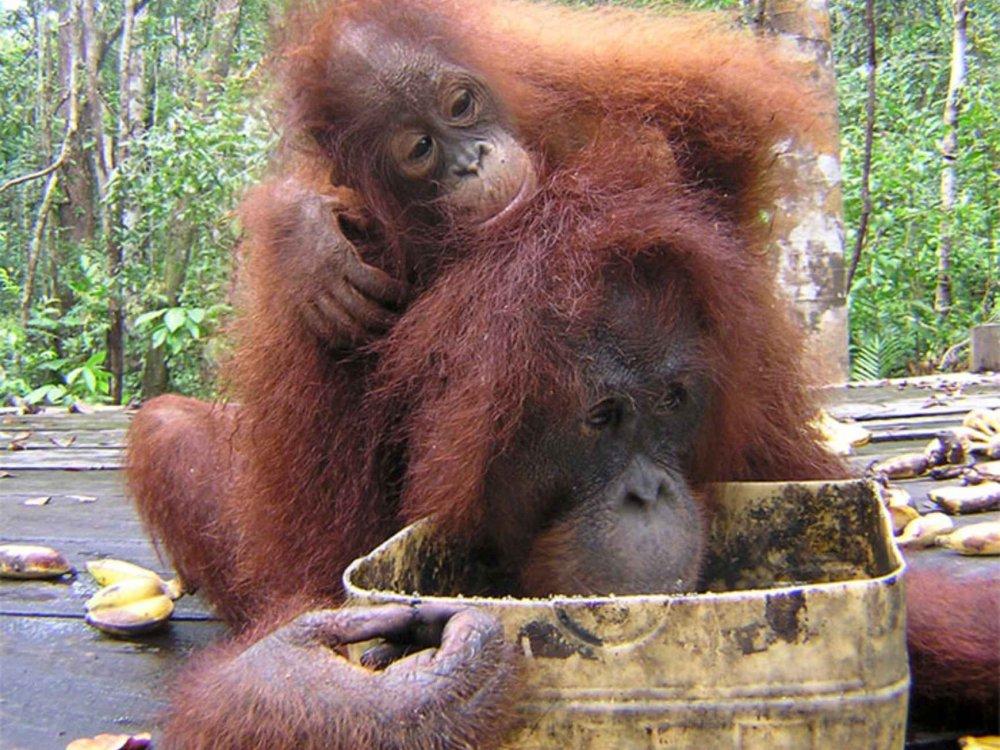 Orang Utan & River Safari in Kalimantan