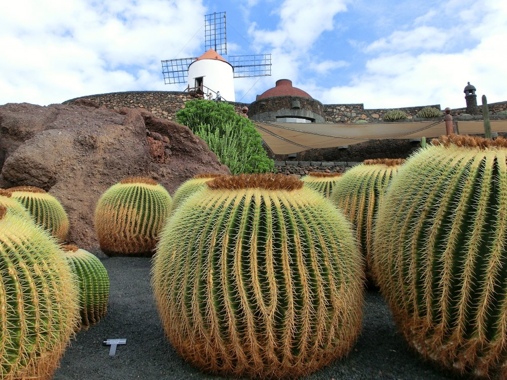 Lanzarote Windmühle und Kakteen
