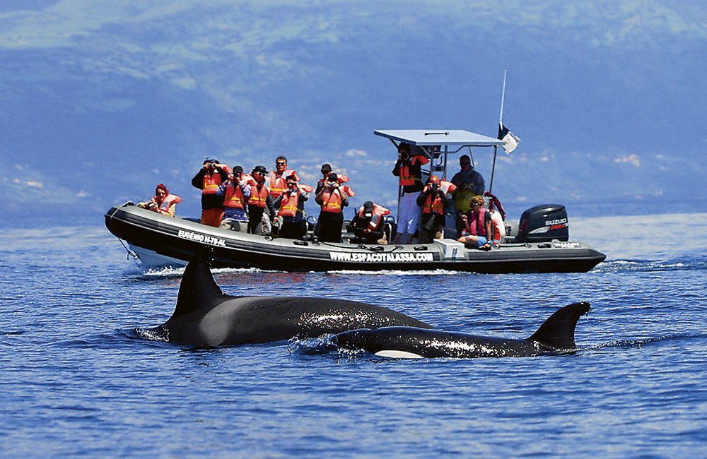 Azoren Bootsausflug Wale