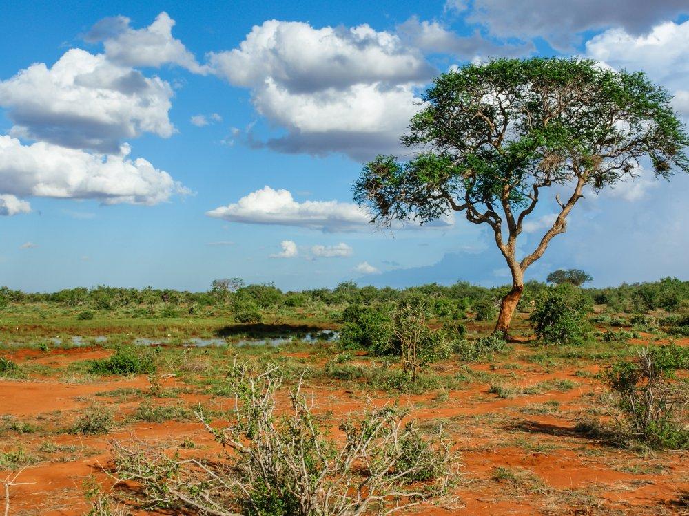 Landschaft in Tsavo Nationalpark