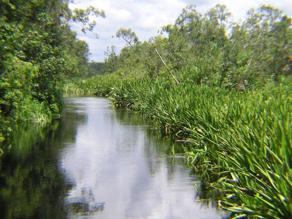 Sekonyer River - Tanjung Puting NP