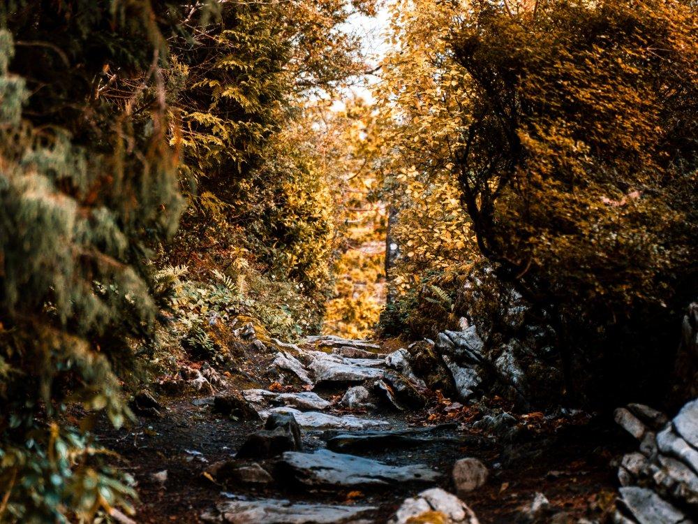 Wanderweg im Killarney Nationalpark