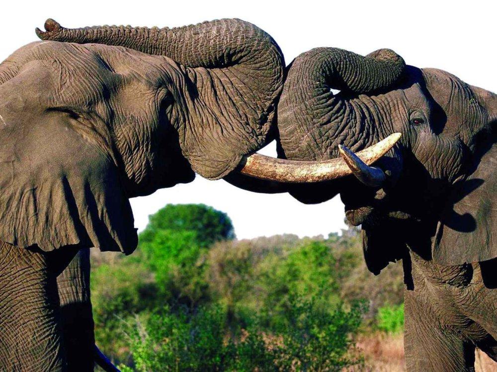 Erlebnis Wüste & Okavango