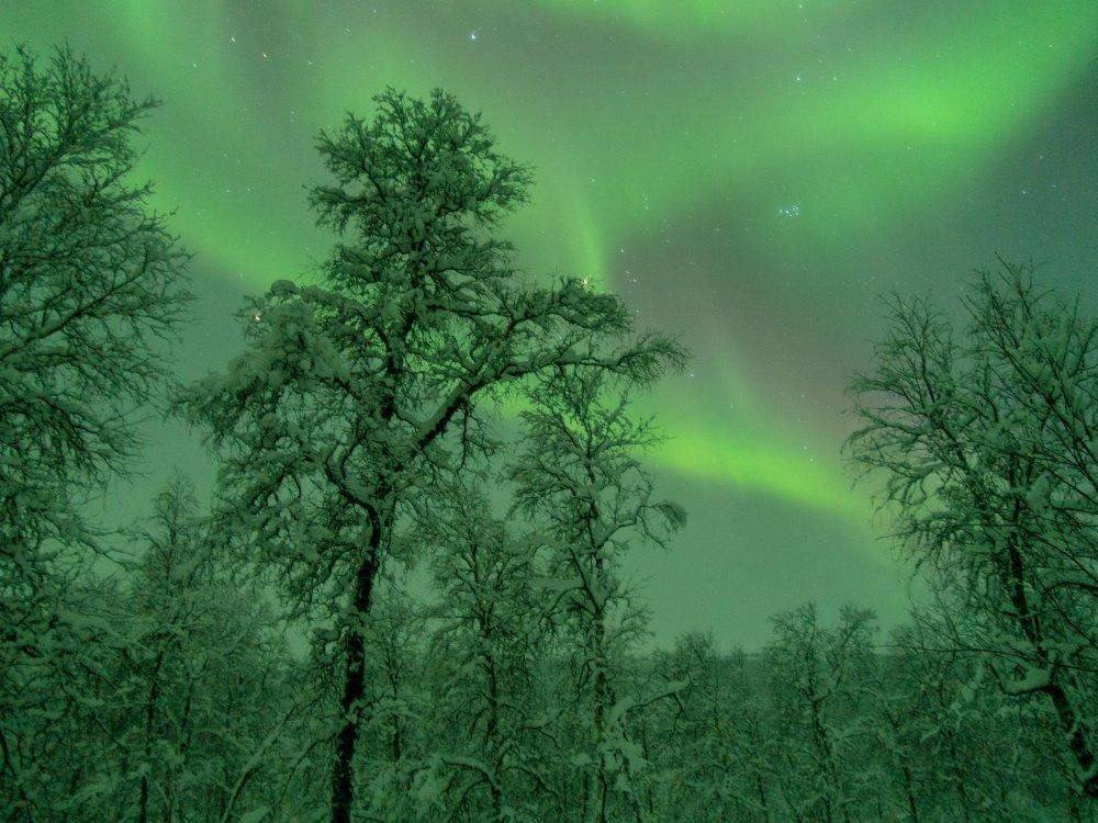 Polarlichter im Vindelfjällen