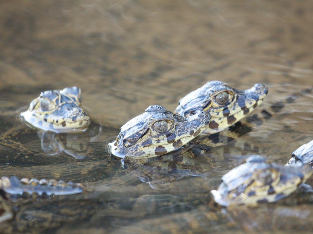 Tiere Pantanal_1