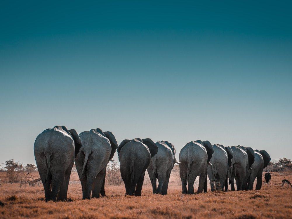 Elefantenherde zieht durch Etosha