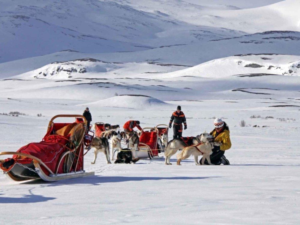 Huskytour durch Nord-Schweden