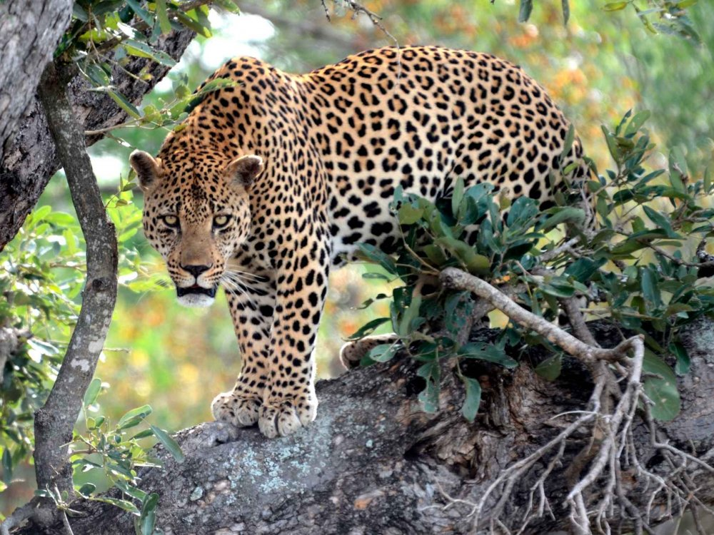 155Y10404 Makalali Game Reserve Karte