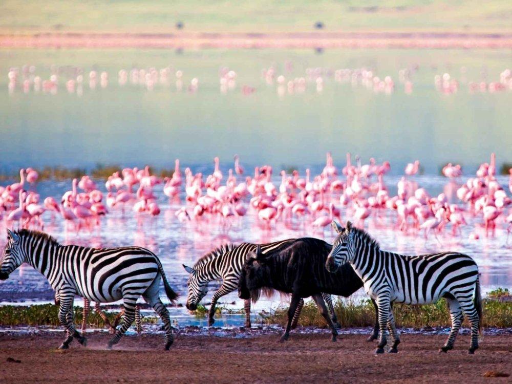 Kenia Camping Safari - Masai Mara, Nakuru & Amboseli