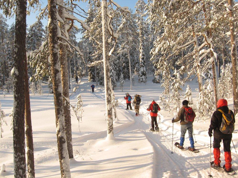 Schneeschuhtour im verschneiten Wald