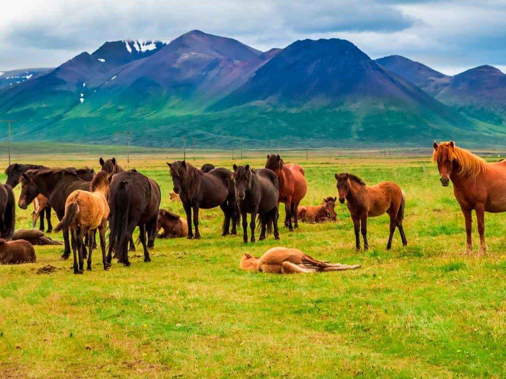 Islands Pferde, heiße Bäder & Naturschönheiten