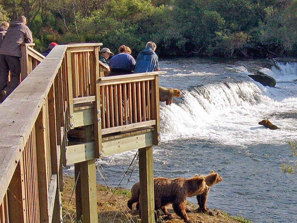 Bärenbeobachtung im Katmai Nationalpark