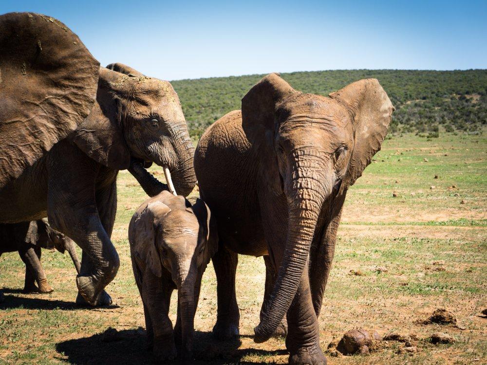 Elefantenfamilie im Addo Nationalpark