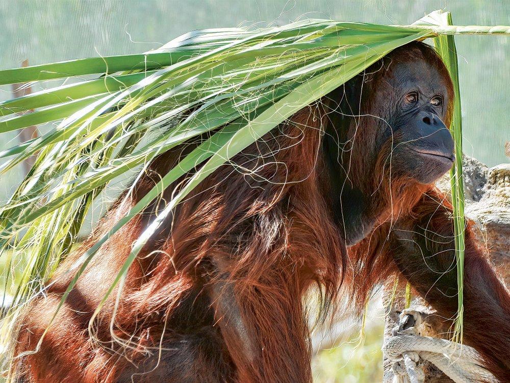 Borneo Insider Reise